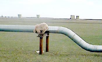 Bears Really Hate Pipelines Huh?